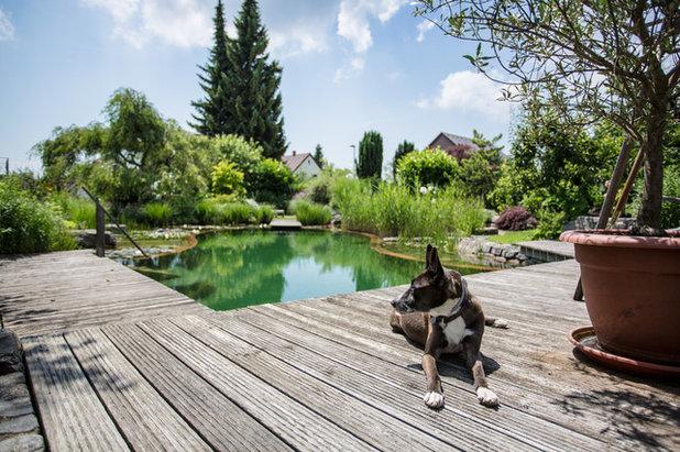Piscine de la semaine un am nagement cologique en allemagne - De la piscine au jardin ...