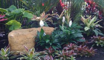 Small tropical Backyard