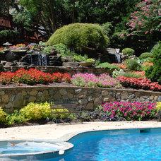 Tropical Pool Swimming Pool