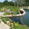 Secrets of a Successful Water Garden