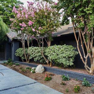 Esempio di un portico moderno di medie dimensioni e davanti casa con un giardino in vaso, lastre di cemento e un tetto a sbalzo
