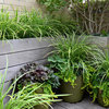 Create High-Impact Container Gardens With Grasses
