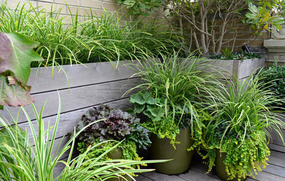 Grow a Container Garden Whatever Size Your Space