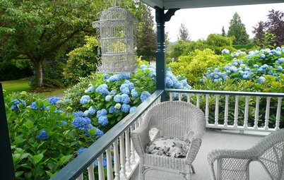 Summer Gardens Sing With Blues