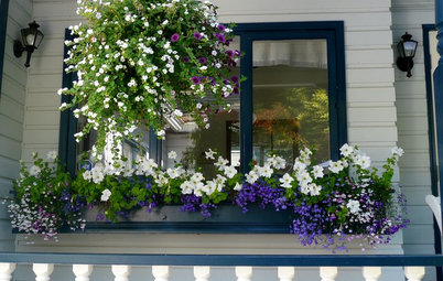 Window Boxes Captivate on the Curb