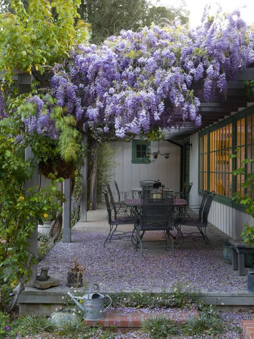 Wisteria Ideas Pictures Remodel And Decor