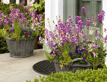 Spring Annuals in Stone Basket Planters