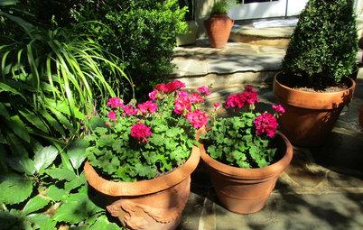Fråga experten: Här är de bästa växterna för altan och balkong