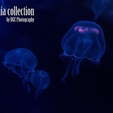 California collection by DGC STUDIO