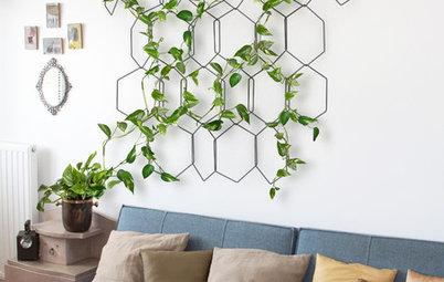 How Do I... Choose Indoor Trailing Plants?