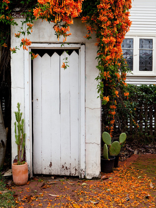 Trumpet vine houzz for Garden shed perth