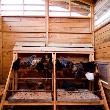 Alabama Chicken Coop