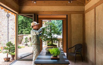 Perché Crescere un Bonsai Potrebbe Cambiarti la Vita