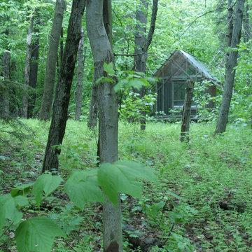 fern house in summer