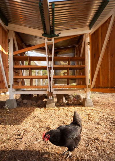 Collecting Rainwater And Eggs From A California Chicken Coop