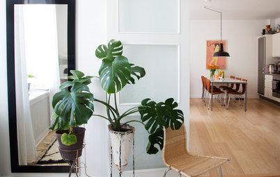 De store stueplanter hitter – men hvilken skal du vælge?