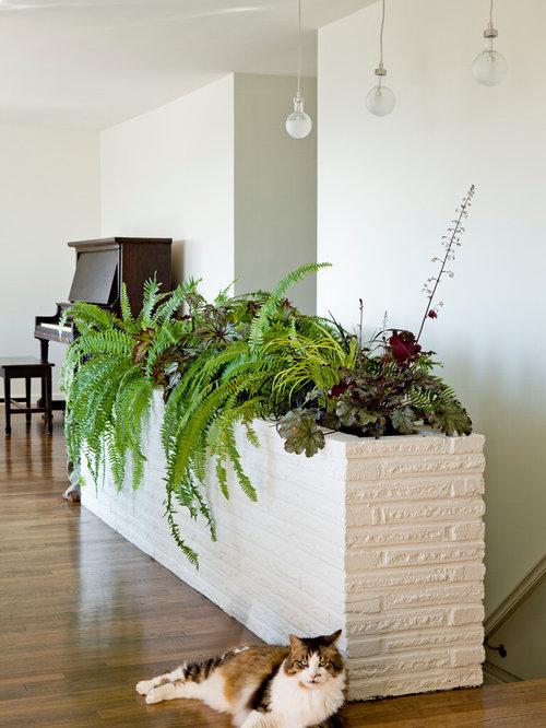 Fern Planter Houzz