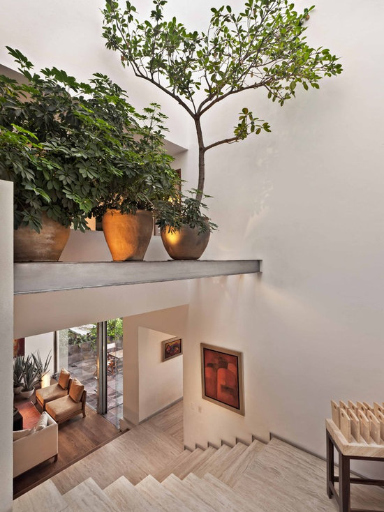 Tall House Plants contemporary tall indoor plants | houzz