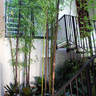 サンフランシスコのアジアンスタイルのおしゃれな階段の写真
