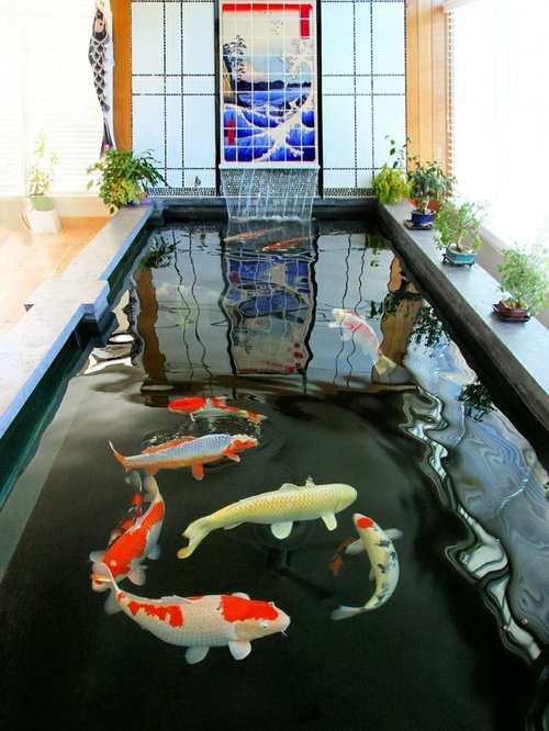 Indoor koi pond houzz for Indoor pond design