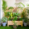 How to Grow a Blooming Balcony Garden