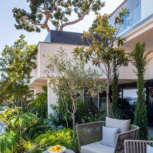 Cette photo montre une terrasse avec des plantes en pots arrière tendance de taille moyenne avec une extension de toiture.