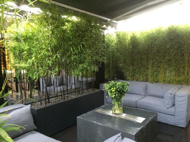 Piante sempreverdi da vaso per terrazza e balcone for Piante da vaso per esterno