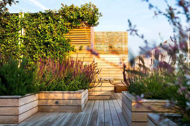 Contemporary Terrace by Town and Country Gardens