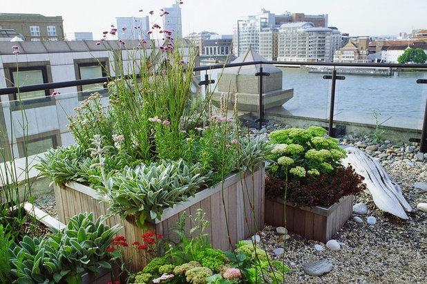 Coastal Terrace by GreenlinesDesign Ltd