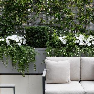 Ispirazione per una piccola terrazza chic sul tetto con un giardino in vaso e nessuna copertura