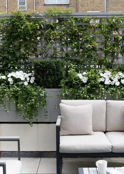Klassisk Terrasse by The Garden Trellis Company