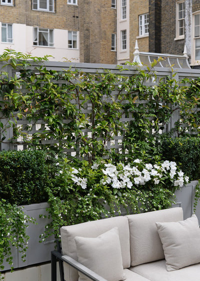 Traditional Terrace by The Garden Trellis Company