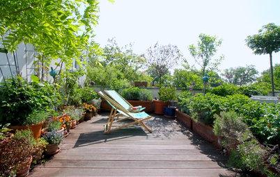 Jardín de la semana: Un pequeño paraíso en una azotea de Berlín