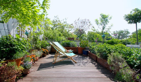 Houzz Германия: Цветущий сад на крыше в Берлине