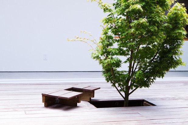 Comment int grer un arbre la conception des espaces ext rieurs - Arbre pour terrasse appartement ...