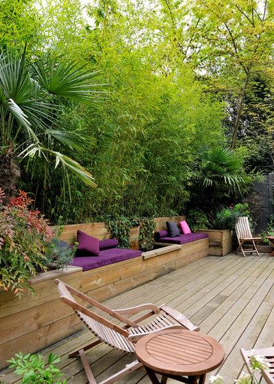 Piante tropicali per tramutare in una giungla il giardino for Piante da giardino tropicali