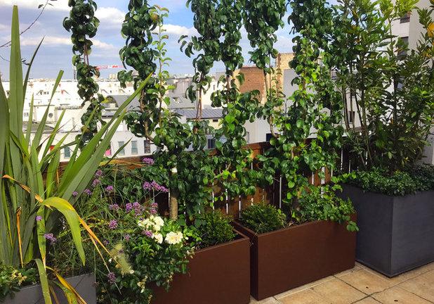 Contemporary Terrace by Duval&Bossennec - Paysagiste concepteur