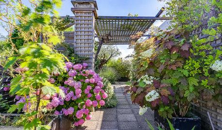 Terrasse de la Semaine : Comme un jardin suspendu à Neuilly