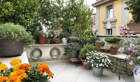 Klotzen statt kleckern: Üppige Topfpflanzen für große Balkone