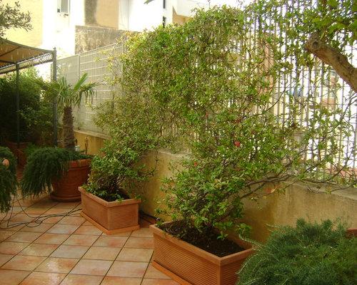 Foto terrazzo con gelsomini