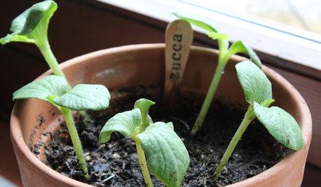 DIY : Préparez vos semis en intérieur pour un potager gourmand
