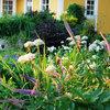 Juli – Årets bästa månad i trädgården?