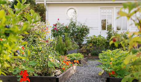 Experttips: Vilka växter är fina att kombinera i pallkragen?