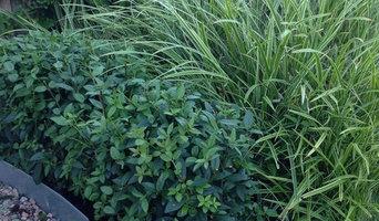 Ny trädgård med gröna former