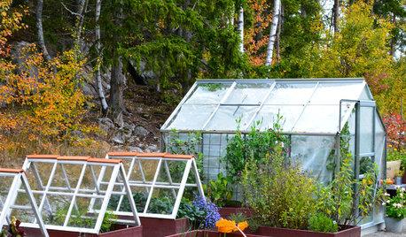 Skippa blommorna – grönsaker och örter som växer bra i Sverige