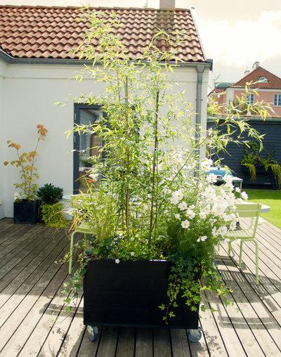 Skandinavisk Have by Arkitektens Trädgård