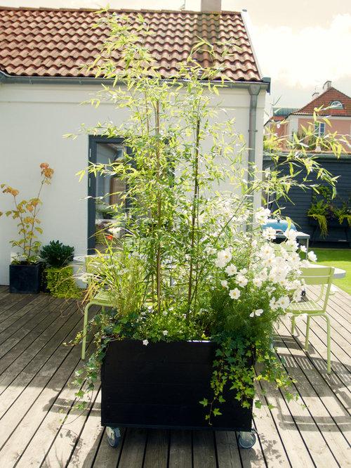 Scandinavian Garden Design Ideas, Renovations & Photos