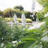 Mormorsträdgård – klassiskt romantiska växter och nostalgisk grönska
