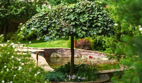 Как правильно: Выбрать деревья для будущего сада