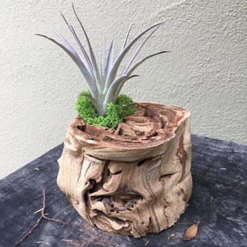 Garden Inspired Decor & Gifts